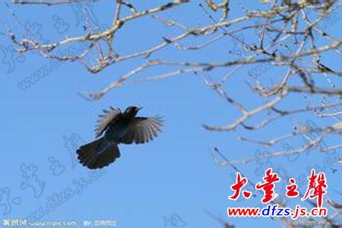 为什么小鸟能在空中飞翔